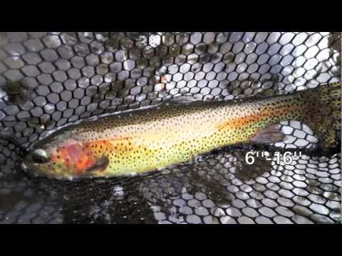 Fly Fishing Clear Creek Golden Colorado - River Info