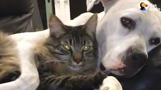 Dog Won't Stop Cuddling His Cat   The Dodo