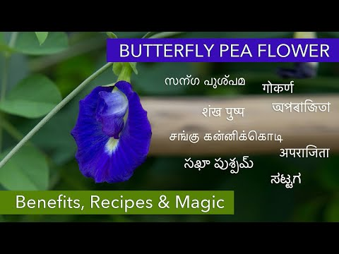 Blue herbal tea | Butterfly Pea Flower Shankhapushpi | Memory Tonic | Antioxidant Tea | Anti-HIV tea
