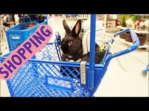 Rabbit Goes Shopping!!
