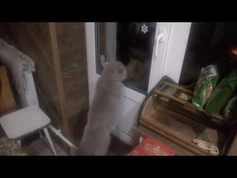 'Открой мне!!', говорящий кот Яков