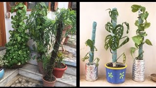 DIY Moss Stick for Bonsai, Money Plant, Indoor Planters with Aruna Agrawal