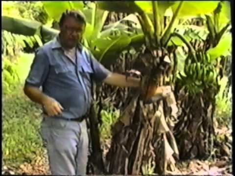 ECHO Tropical Fruits Video Series - (Part 6 of 6) Banana and Jackfruit