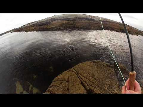 Drifting Flies On The Surface For Pollock - Saltwater Fly Fishing