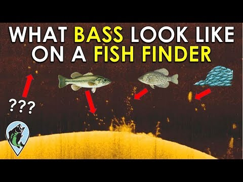 Identify Bass On Fish Finder In 3 Easy Steps! | Fishing Sonar Basics
