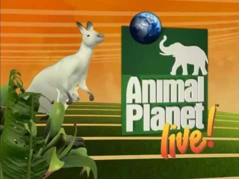 Animal Planet LIVE! Show - Main Title Open & Theme Music Score