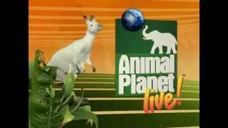 Animal Planet LIVE! Show - Main Title Open & Theme Music Score