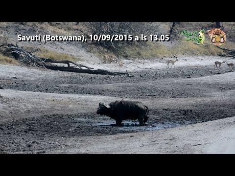 Un safari móvil en el corazón de Botswana [TRAILER]