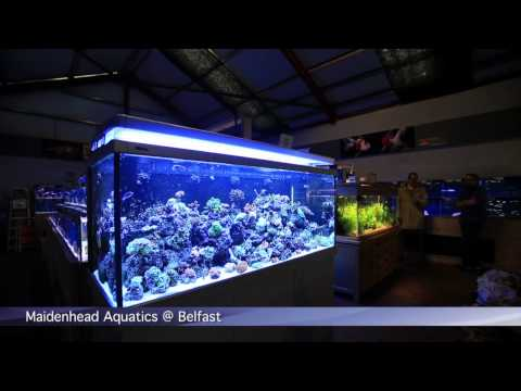 PFK Shoptour: Maidenhead Aquatics @ Belfast
