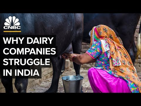 Why Big Dairy Companies Struggle In India