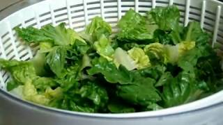 Cutting, Washing, Cleaning and Storing Lettuce in Bags in Bulk for Salads, Sandiches or Wraps