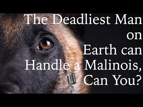 Belgian Malinois Training - Think You Can Handle This Breed? - Dog Training Podcast