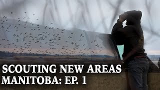 Scouting For Ducks In New Areas | Manitoba Duck Hunting