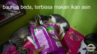 Download Video Reaksi Kucing Kampung diberi Makanan Mahal (Whiskas) MP3 3GP MP4
