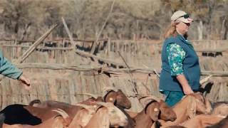Gambar cover Goat Genetics   Going into Goats