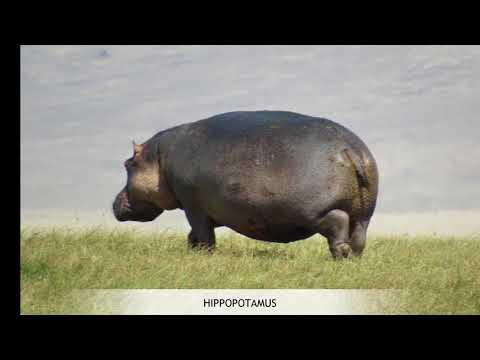 Ngorongoro Crater Movie1