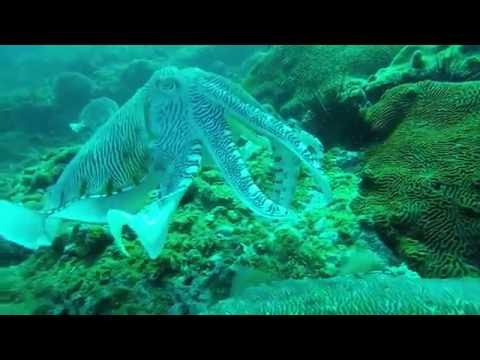 Diving Daymaniyat Islands, Oman 8.10.16