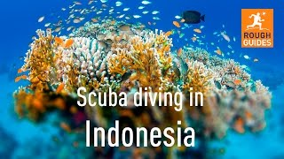 Rough Guides go diving in Raja Ampat, Indonesia