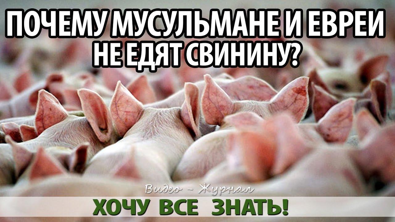 Картинки по запросу почему мусульмане и иудеи не едят свинины
