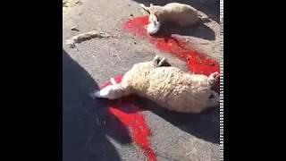 Grave accident blessant plusieurs personnes et tuant des moutons