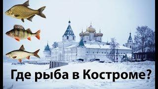 Здорово Кострома! А рыба где?