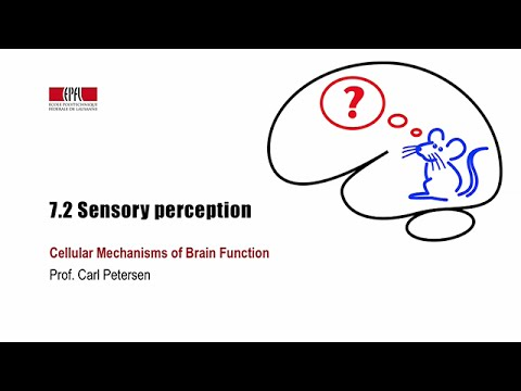 7.2 Sensory perception