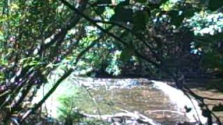 San Lorenzo River Santa Cruz County California JD Deal Videos