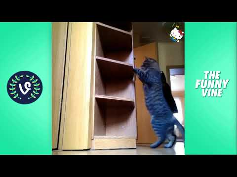 Funny Cats Compilation 2016 - Best Funny Cat Videos Ever Funny Vines