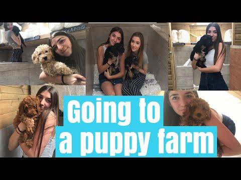Choosing our dream dog