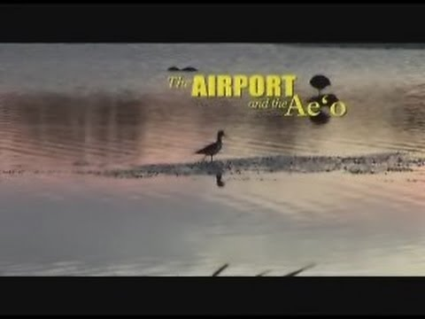The Honolulu International Airport and the Ae'o - Full video