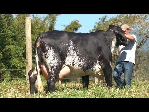 LOTE 38   7452W   COC AGROPECUÁRIA   LEILÃO ALIANÇA GENÉTICA