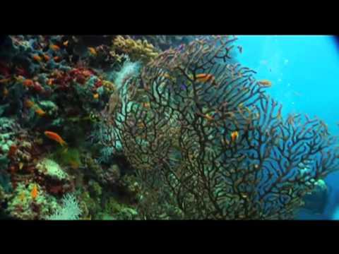 Maldives promo video - the sunny side of life