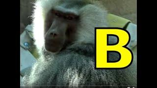 ALPHABET ANIMALS  - PHONICS  -  ALPHABET SONG  (Part 24)