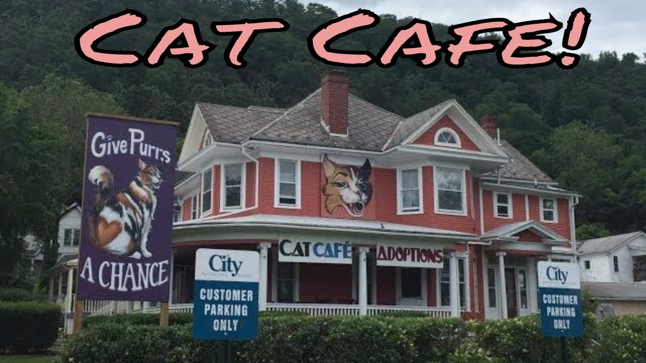 Cat Cafe In Berkeley Springs Wv