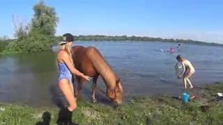 Девушки купают коня