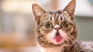 ЧТО СКРЫВАЕТ ТВОЙ КОТ? Малоизвестные факты о кошках
