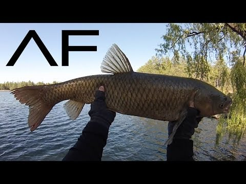 PineTop Lakeside Fishing At Lake Of The Woods And Rainbow Lake Arizona