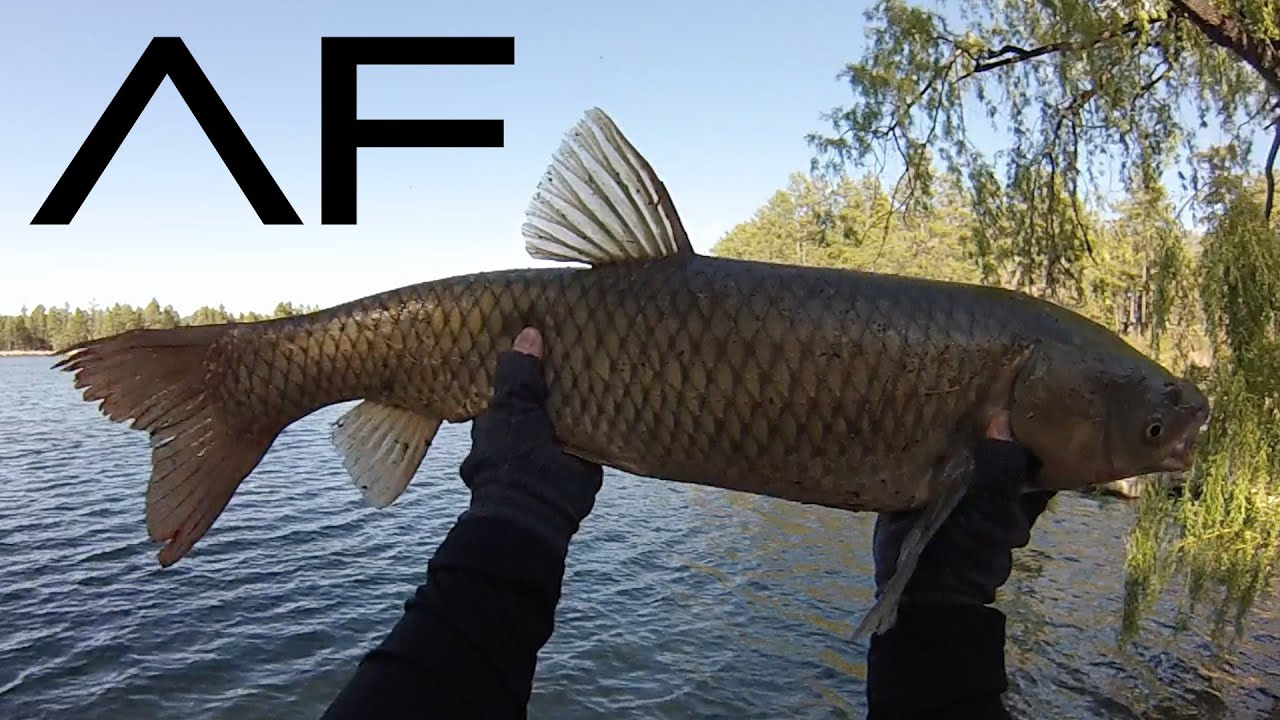 Pinetop lakeside fishing at lake of the woods and rainbow for Best fishing in arizona