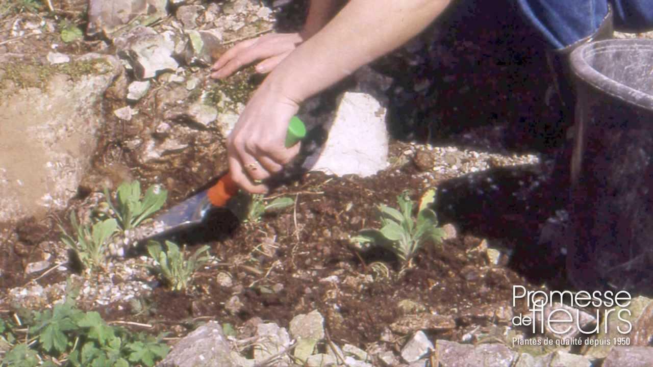 Planter des plantes alpines en rocaille, vidéo conseil pour le ...