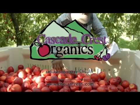 Cascade Crest Organics Grower Interview