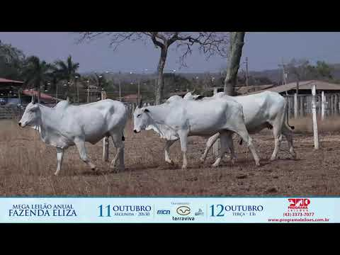LOTE 186