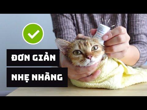 Cách NHỎ TAI Cho Mèo 😸✅   Hướng Dẫn Chi Tiết Từng Bước