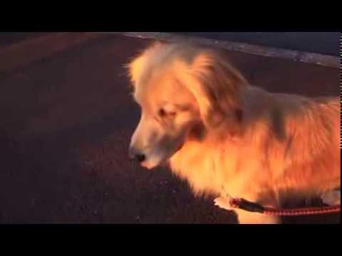 Chó nhái tiếng còi báo động  -  Chuyện lạ -  Dân trí