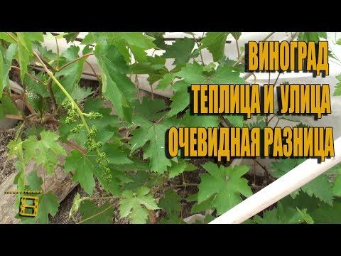 Промышленное пчеловодство в условиях Сибири