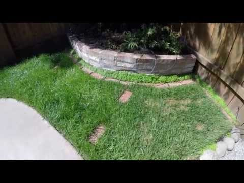Mowing Lawns For A Living Cutting A Small Lawn Fast T