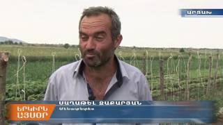 Արցախի գյուղնախն աջակցում է բանջարաբոստանային կուլտուրաների զարգացմանը