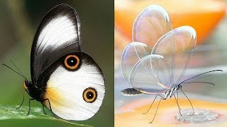 Top 50 Most Beautiful Butterfly In The World | Pictures | Photos | Images