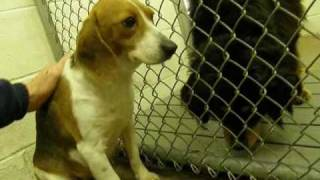NOODLES THE POOR ABUSED  SHELTER DOG.wmv