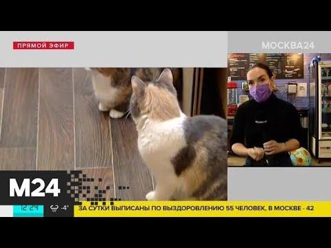 Из-за карантина в одном из московских котокафе закрыты 25 кошек Москва 24