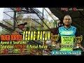 Ngamuk Di Tanah Jawa Murai Borneo Keong Racun Raih Hattrick Mahakarya Borobudur  Mp3 - Mp4 Download